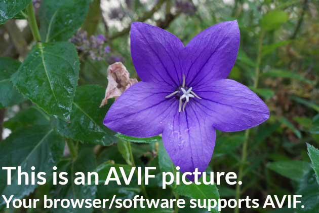 El nuevo formato AVIF para comprimir imágenes 4